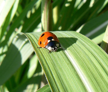 Lady Bug Crop Consulting