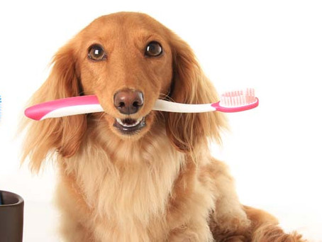 Oral Health; The Deeper Truth