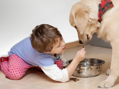 Put life back into your pet's food
