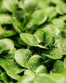 salad-264826_640.jpg