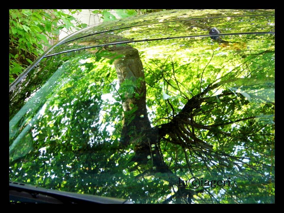 Bruges (albero)