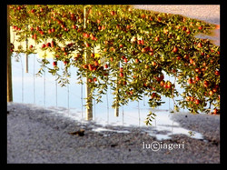 Val di Non - Pozza d'acqua (Mele.jpg