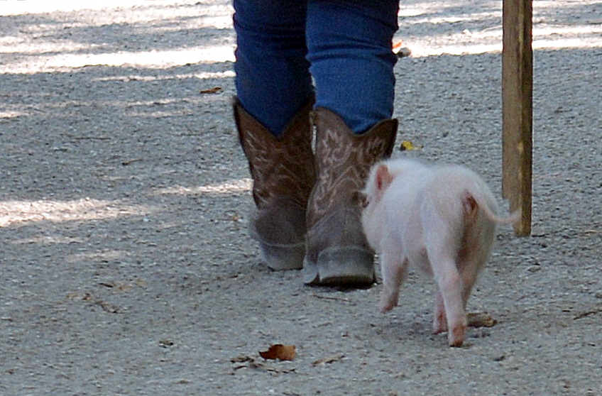 piggie and boots penelope