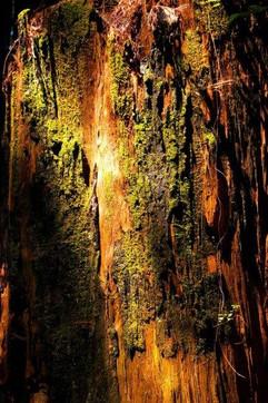 moss light.jpg