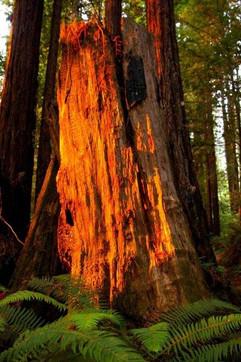glowing stump