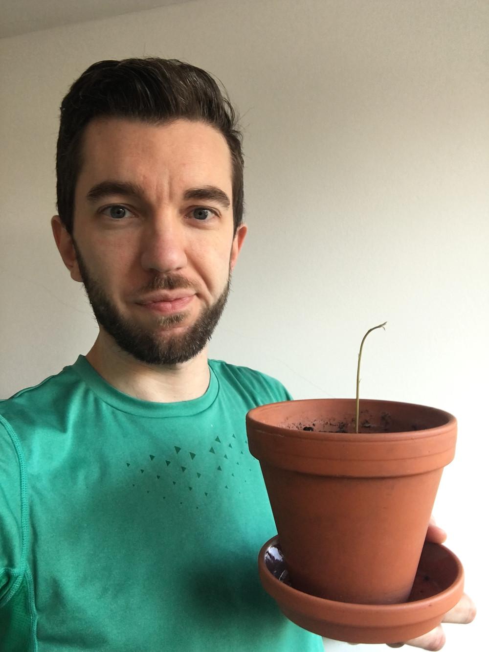 avocado plantdad propagation