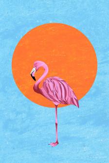 edit flamingo.jpg
