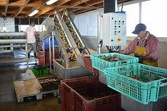 la ferme ostréicole de cancale mont saint-michel