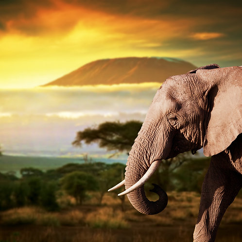 Elephant Scenary