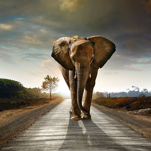 Elephant roads