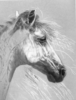 Picasa - Pastel horse from book enlargement.jpg