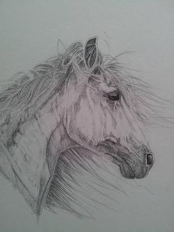 Picasa - pencil horse head-001.jpg