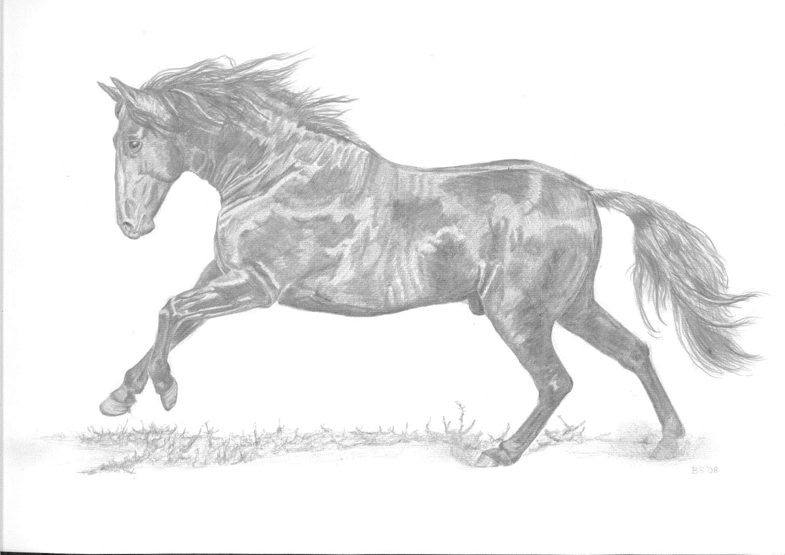 Picasa - Pencil drawing from a B&W Photo of an Andalucian horse