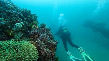 New diving pic 6-1-18.tif