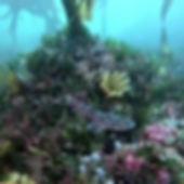 shark diving Neptunes divers