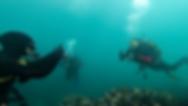 New diving pic 6-1-25.tif
