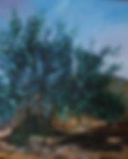 Aceites Calabrús, aceite de oliva vírgen Aceites Calabrus