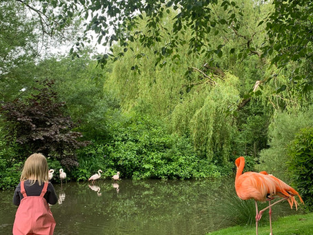 Coton Manor Gardens and Flamingo