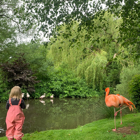 Coton Manor Gardens and Flamingo