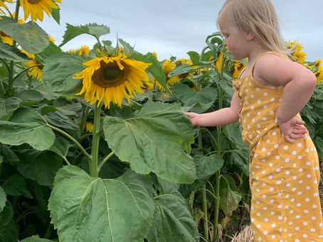 The Patch MK - Sunflowers