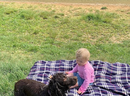 Dog Friendly Family Days Out.