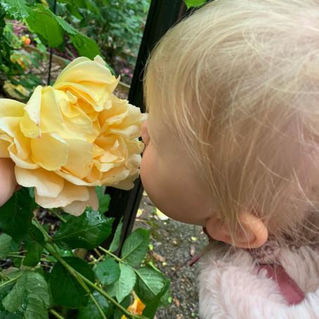 Bletchley Sensory Garden