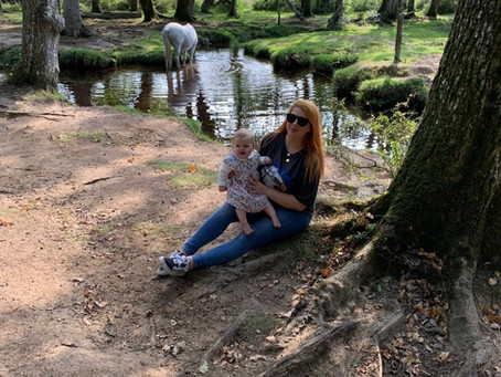 The New Forest Family Walks