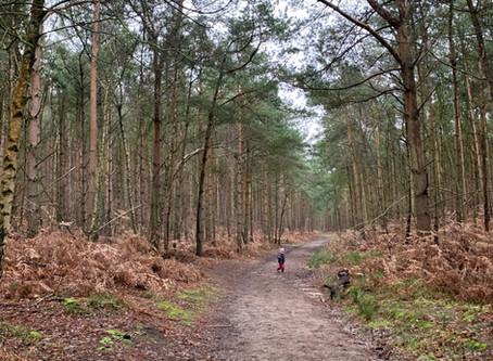 Aspley Heath Wood