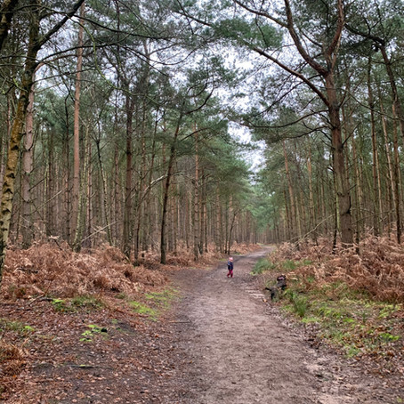 Aspley Heath Wood