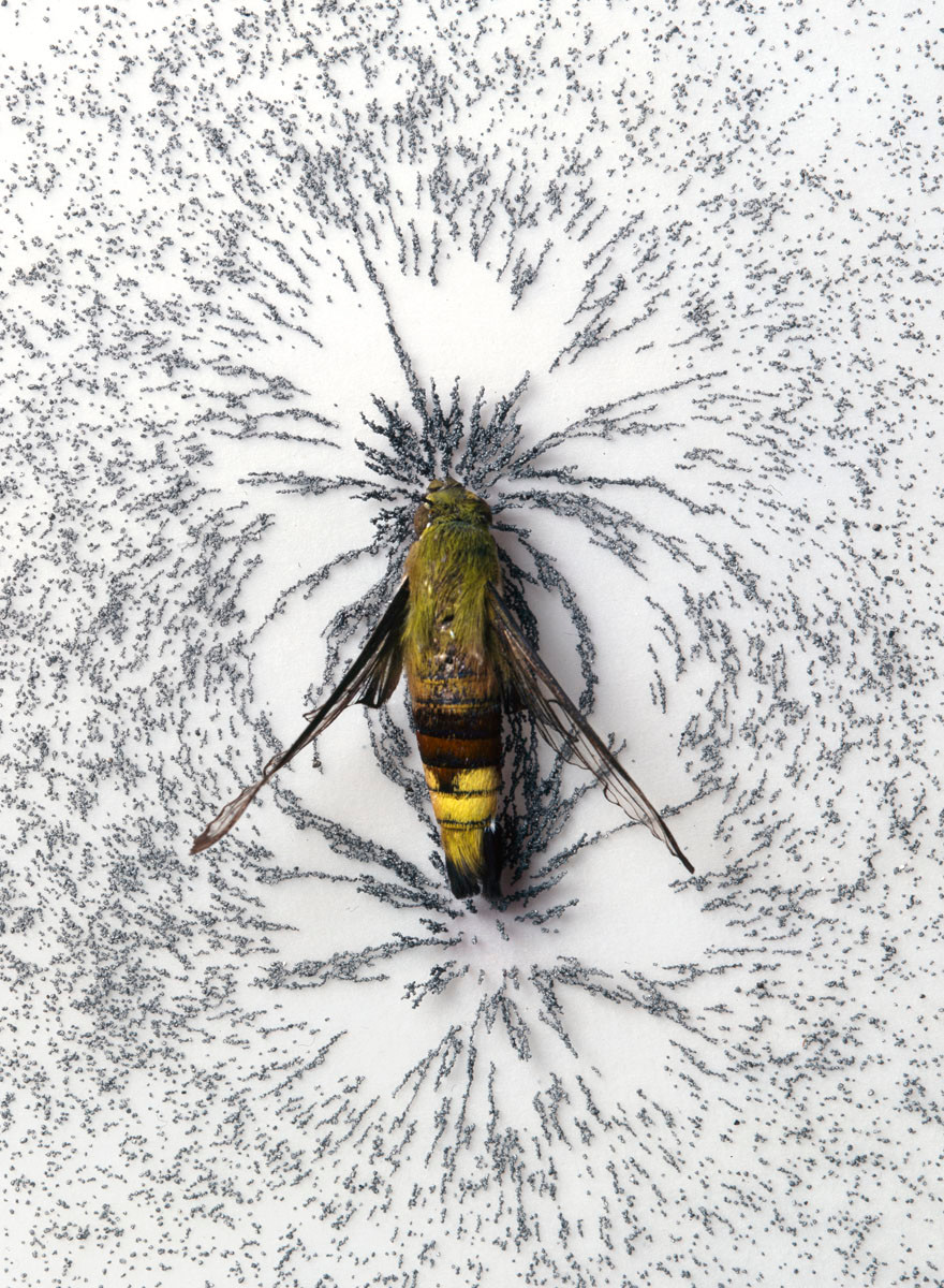 Moth Generator: Magnetic Moth