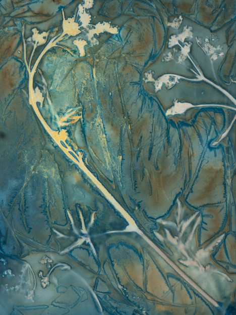 Invasive Species Cyanotypes