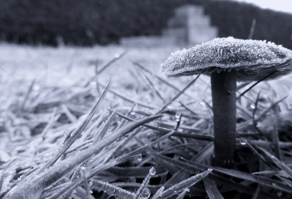 mushroom2_edited_edited.jpg