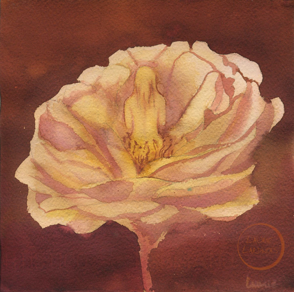 sunset rose 2 L.jpg