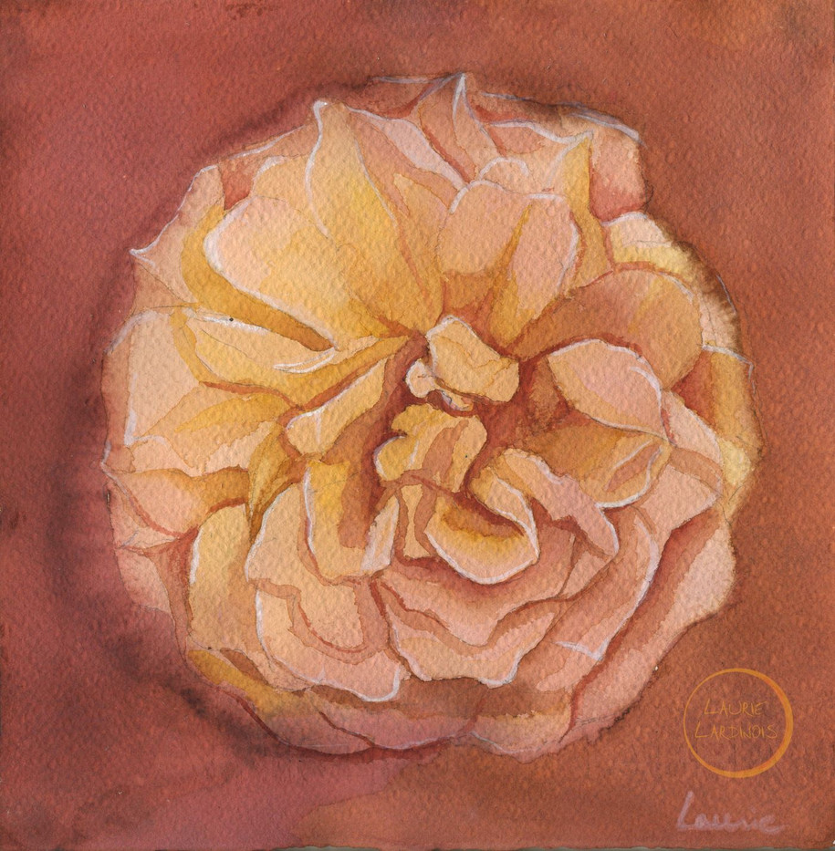sunset rose L.jpg