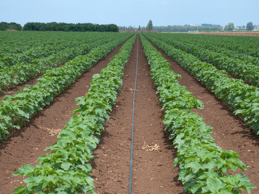Why Organic Cotton?