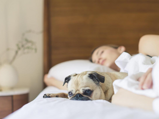 Should You Let Your Pet Sleep With You?
