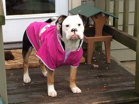 Emma raincoat