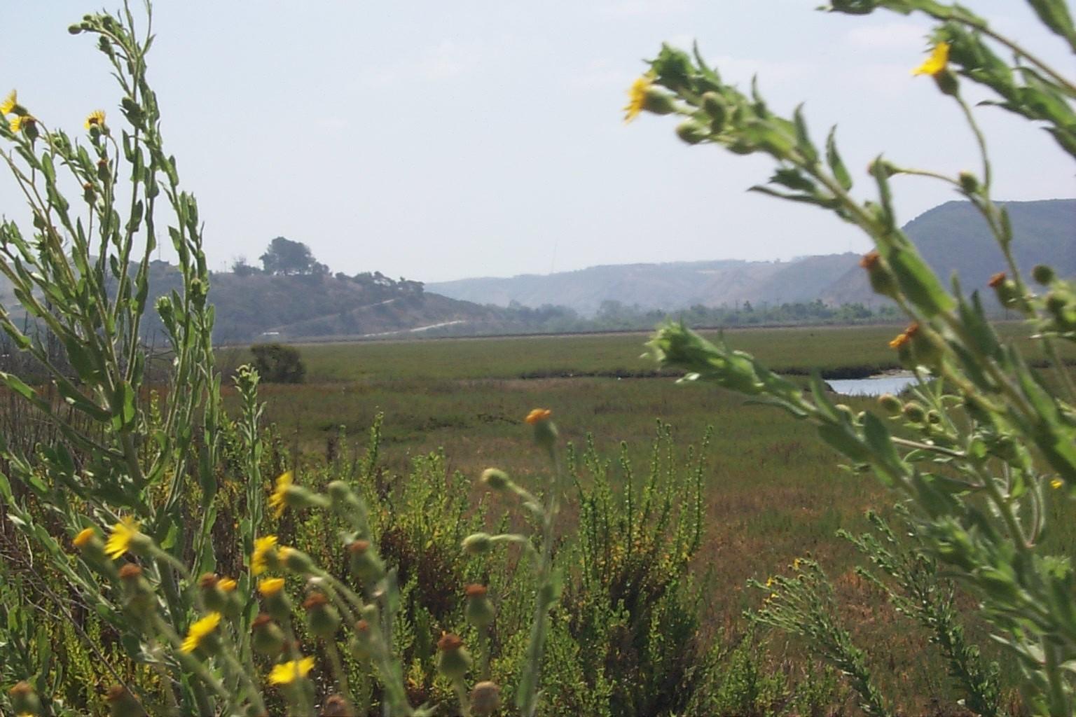 Habitat Preservation