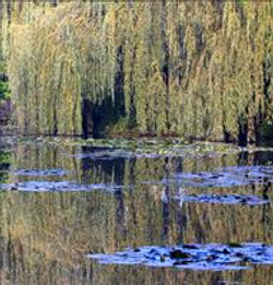 Monet Reflects