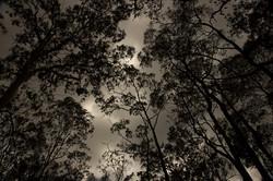 Rainforest Brisbane