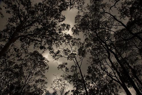 Rain Forest Brisbaine