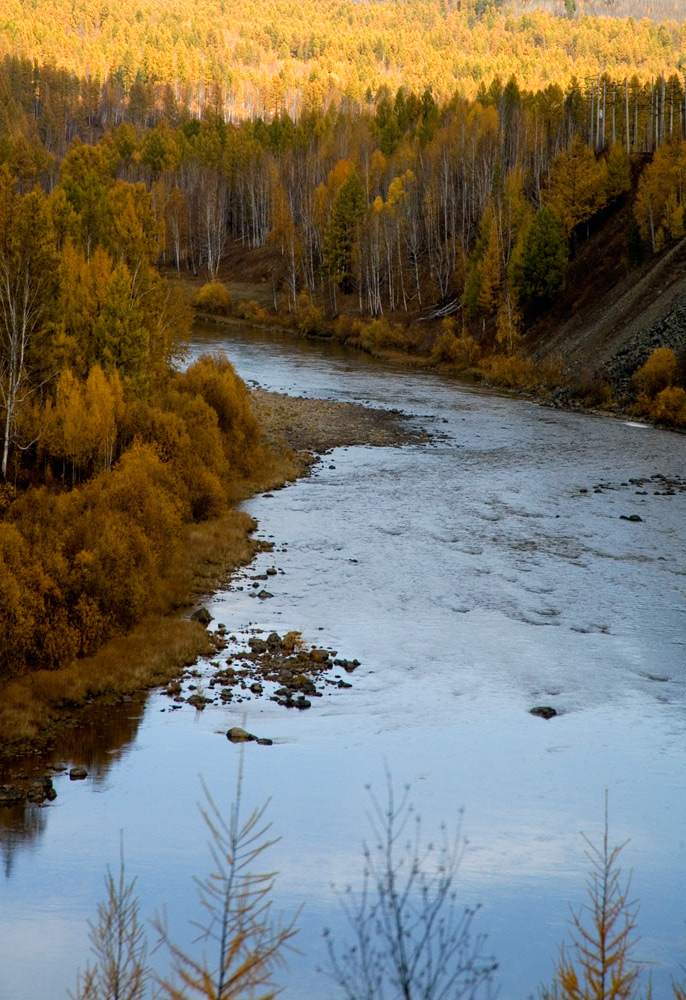 River and Larch Siberia
