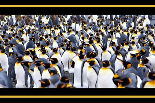 Penguin Pollack