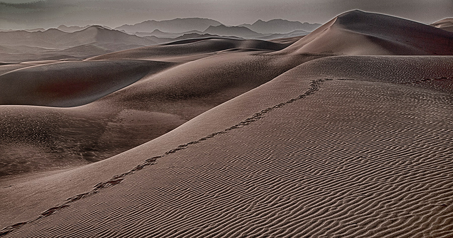 Dune Oryx Tracks Serra Cafema
