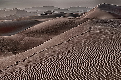 Serra Cafema Dune Oryx