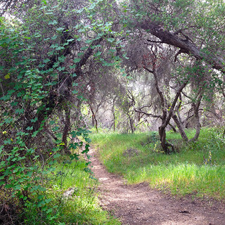 Preserve Trail.jpg