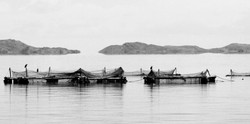 Titikaka Fishing