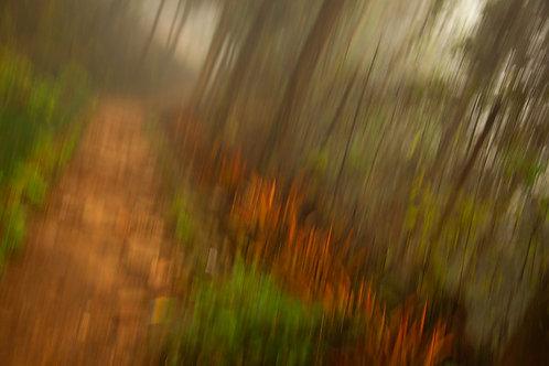Rain Forest Sapa