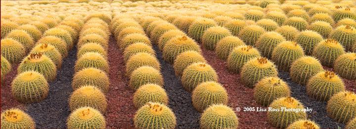 Botanical Cabo