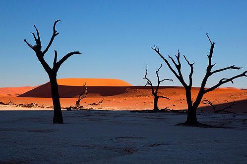 Black Forest Namibia